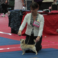 Euro Dog Show 2012 - SMOOTH COAT