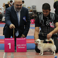 Euro Dog Show 2012 - LONG COAT