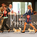 World Dog Show 2012, Arena