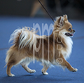 World Dog Show 2012, Long Coat